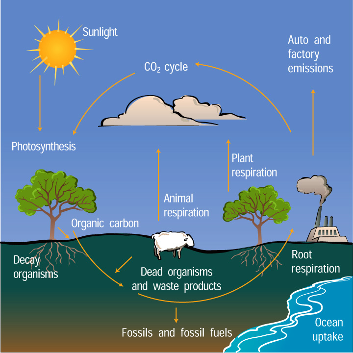 How to convert Carbon dioxide into Carbon and Oxygen?